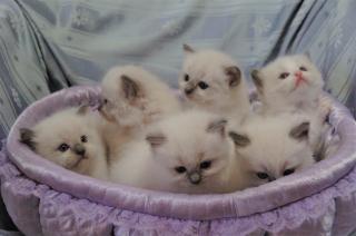 子猫1か月